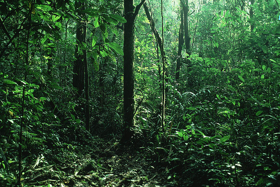 the congo tropical rainforest of africa Africa's biomes - the guinea-congo forests  tropical rainforests are most well developed in equatorial areas of low latitude, high humidity and low elevation.