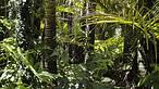 Amazon Rainforest ©Creative Commons