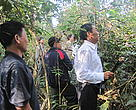 Vietnamese delegates visited a certified rattan forest in Khamkeut district, Boulikhamxay province
