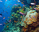 The Great Barrier Reef has thousands of kinds of fish and hundreds of types of corals.