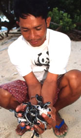 WWF researcher with newly hatched sea turtles, Turtle Island, Philippines.  	© WWF / Jürgen FREUND