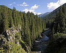 River through fir forest, Retezat National Park, Carpathian Mountains, South-West Romania
