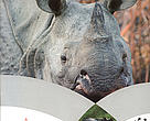 Cover of Rhino Action Plan