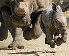 22 September marks World Rhino Day 2014