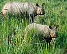 Nepal's Royal Chitwan National Park is home to one of the largest remaining populations of the greater one-horned rhino.