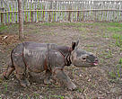 A rhino calf whose mother was killed by poachers is now being taken care of by conservationists.