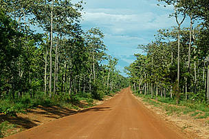 Road through the dry forest ecoregion in Cambodia.