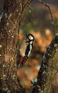 Animal Life | WWF