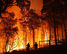 Firefighters battle a bushfire at Colo Heights, New South Wales.