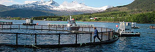 Villa Leppefisk, a salmon farm in Norway on the path to sustainability. / ©: WWF / Jo BENN