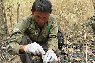 Collecting sample to study elephant population  in Mondulkiri Protected Forest