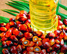Guide to Sustainable Palm Oil for Singapore Companies