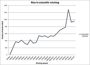 The rise in scientific whaling to 2008. / ©: WWF