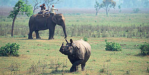 Indian rhinoceros (Rhinoceros unicornis) radio tracking on Indian elephant, Chitwan National Park, ...  	© Michel Gunther / WWF