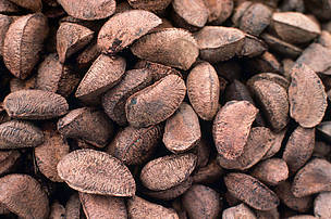 Brazil nuts Brazil nuts come from wild trees as they cannot be grown in plantations Belém, Amazonas, Brazil