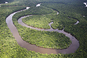 Amazon rainforest, Loreto region, Peru.