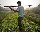 A Chinese farmer carrying his hoe whilst walking to his organic vegetable plot, West Dongting Lake, Hubei province, China.