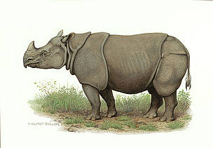 rhino poaching in assam essay