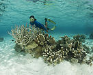 Beautiful coral reef shallow near M'buke Island with snorkeler. Bismarck Sea. M'buke Islands, Manus, Papua New Guinea