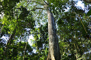 Amazon rainforest, Juruena, Brazil.