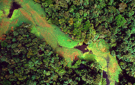 Flooded forest and floating plants aerial view. Rio Negro. Amazonas Brazil rel=