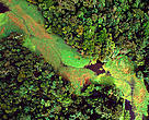 Flooded forest and floating plants aerial view. Rio Negro. Amazonas Brazil