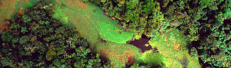 Flooded forest and floating plants aerial view. Rio Negro. Amazonas Brazil  	© Michel Roggo / WWF