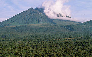 Sabinyo volcano and thick forest, habitat of the endangered mountain gorilla Virunga National Park, ...      © Martin Harvey / WWF