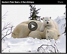 Newborn polar bears: A rare glimpse