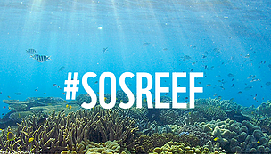 More for Australia to do before reef World Heritage decision