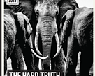 Hard Truth: WWF-Hong Kong report on fundamental flaws in the regulation of the legal ivory trade