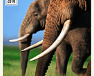 WWF legal analysis entitled Feasibility Study on the Ban of Hong Kong's Ivory Trade