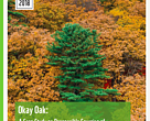 Okay Oak case study Russian Far East