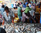 WILD-CAUGHT SEAFOOD: FISHMEAL: THE ANDAMAN TRAWL FISHERY IMPROVEMENT PROJECT