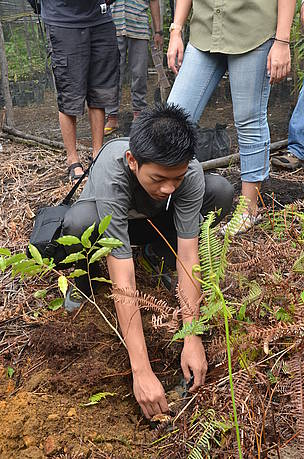 Student from SMA Bhayangkari Pontianak helping out the corridor restoration project by planting a ... / ©: WWF-Indonesia Sugeng Hendratno