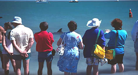 Tourists observing a wild Dolphin in Shark Bay, Western Australia. rel=