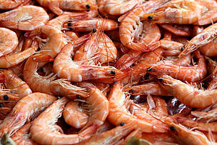 WWF Research Finds Improved Environmental Performance is Good for Shrimp Aquaculture Business