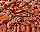 Bottom trawling for Norwegian lobster and other crustaceans is devastating the sea floor and the marine environment.