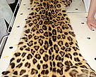 Police are investigating the killing of an Amur Leopard after officers discovered the skin of an adult leopard in a private car