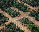 Aerial view over the rainforest showing transect deforestation