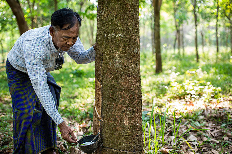 WWF joins global initiative to transform the rubber market