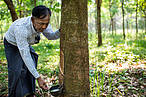 A portrait of rubber farm owners Aung Khon, who has the proper of 12 acres in Pagari village, out side Dawei in Tanintharyi division, Myanmar. © Hkun Lat / WWF-Myanmar
