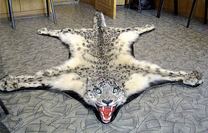 Snow leopard pelt seized from smugglers