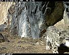 A snow leopard (Panthera uncia) visits its 'relic' site at 4,200 m in Phudongphu, Wangchuck Centennial Park, Bhutan. This is a spot where it repeatedly marks its territory.
