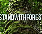 #standwithforests