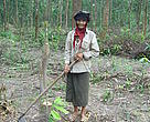 An ethnic minority woman planting cocoa under forest canopy.