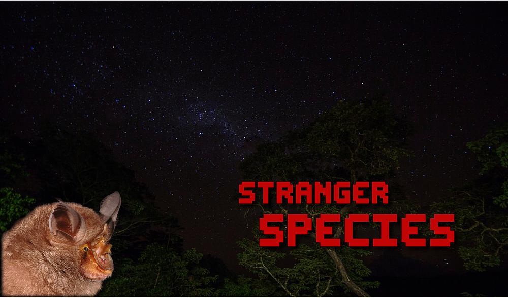 Stranger Species | WWF