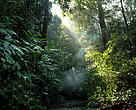 Intertwining branches and vines blocking sun rays in this dense tropical forest.