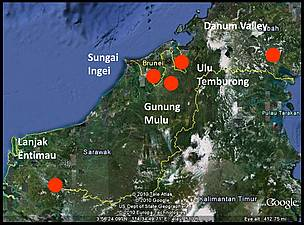 New species discovered in bruneis heart of borneo region wwf sungai ingei in brunei darussalam google earth gumiabroncs Image collections