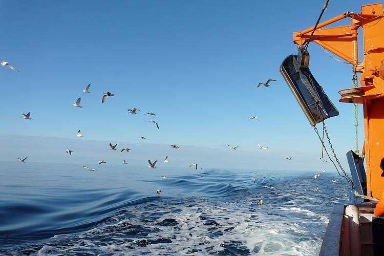 No end in sight: European Commission shows no support to ban overfishing in the Baltic region
